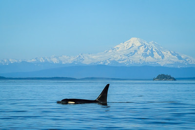 Orca and Mount Baker